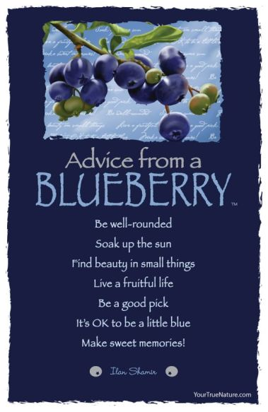 advice blueberries