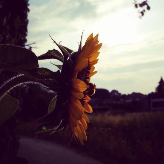 zomerhart