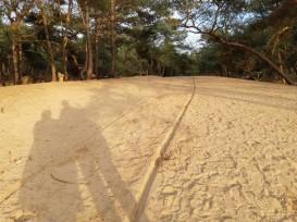 woestijn3